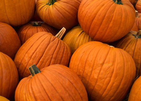 Pumpkin Days Celebration at Tyler Arboretum