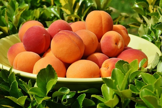 The Peach Festival at Linvilla Orchards Returns Aug. 4
