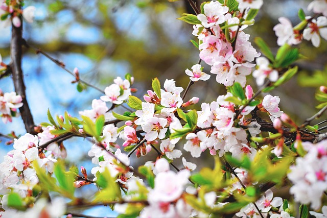 Save the Dates for the Subaru Cherry Blossom Festival of Greater Philadelphia