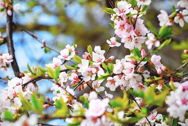 Save the Dates for the Subaru Cherry Blossom Festival of Greater Philadelphia
