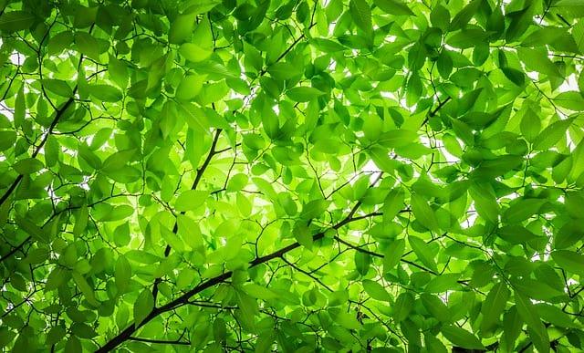 Explore 650 Acres of Nature at the Tyler Arboretum