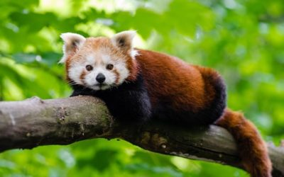 What to Do This Weekend: Visit the Brandywine Zoo
