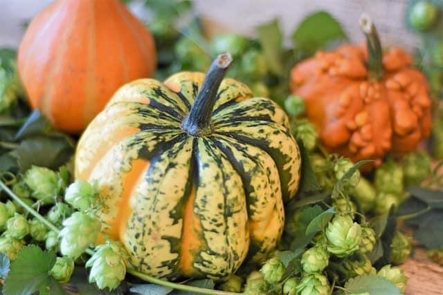 Oct. 5 Near Meetinghouse: Newlin Grist Mill's Fall Harvest Festival!